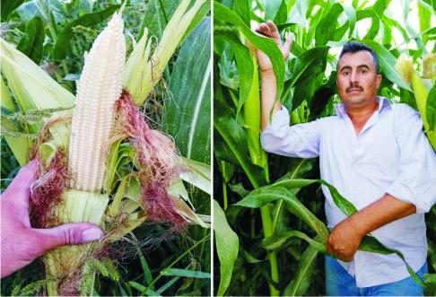 Ereğli Tarım Kredi Kooperatifi Çiftçinin Yanında