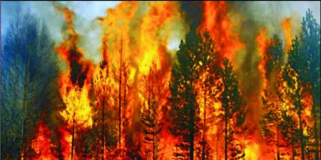 İş-Kur Müdürü Sait Eker: Orman yakanlara cezası verilmeli