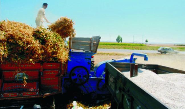 Ereğli'de fasulye hasadı devam ediyor
