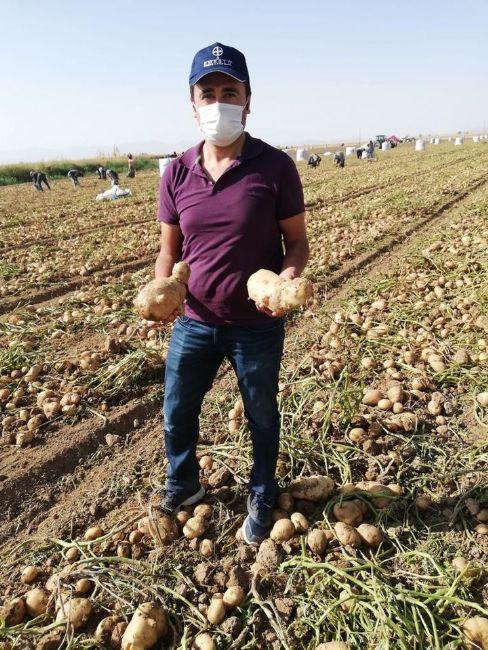 Uzmanlar Ereğli patatesini inceledi