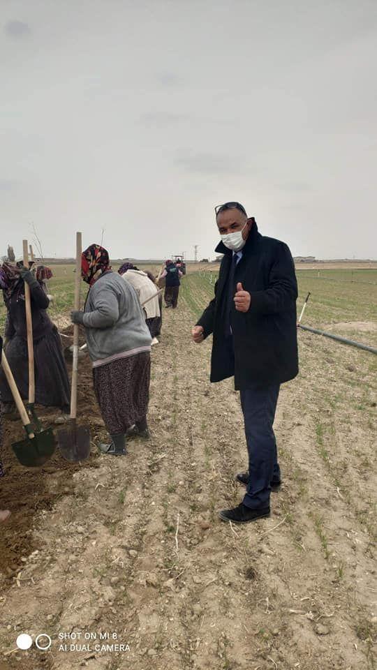 Soylu: Ereğli'de 30.000 adet fidan toprakla buluşacak