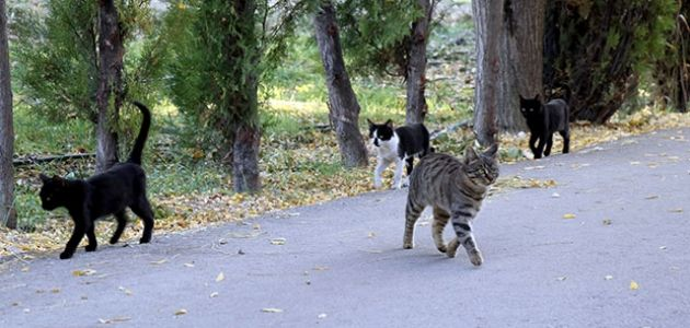 Ereğli'nin parkları sokak hayvanlarına kaldı