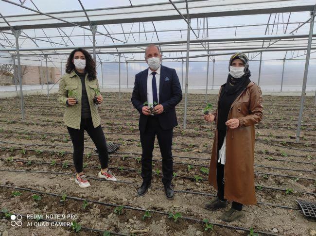 Ahmet Aydın Sarıca Salatalık Dikimi Gerçekleştirdi