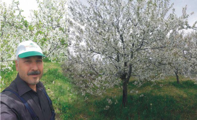 İlçe Tarım Müdürü Sarıca kiraz gelişiminden mutlu