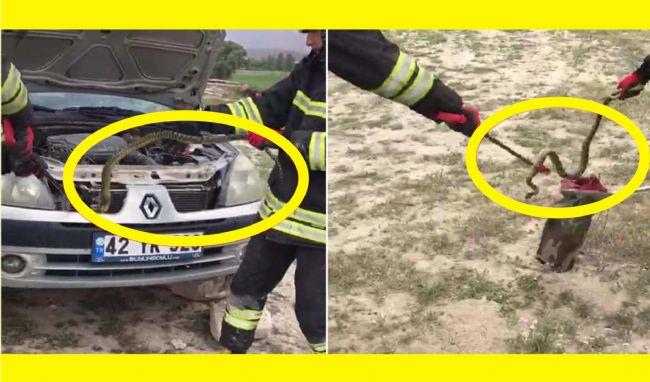 Ereğli'de aracın motor kısmına giren yılan yakalanıp doğaya bırakıldı