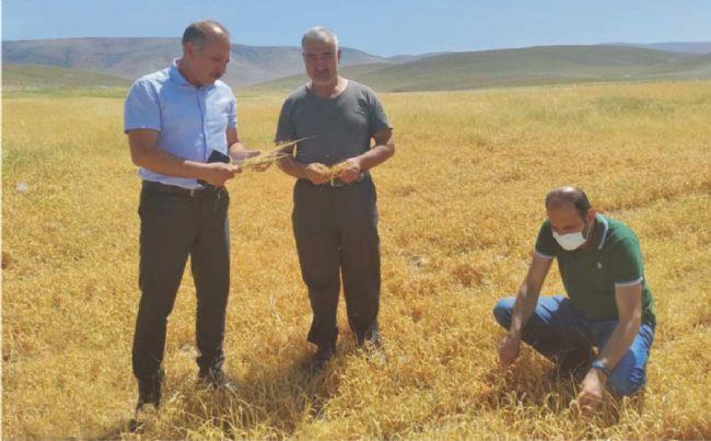 Ereğli İlçe Tarım Müdürü Sarıca Zarar Tesbiti Yaptı